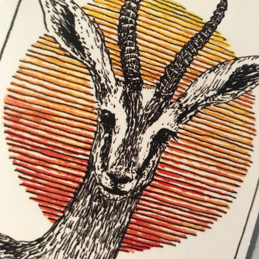Gazelle dessin